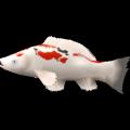 Schwimmender Fisch