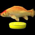 Cooeez #C2 - Fisch