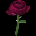 """Mawar """"Puteri"""""""