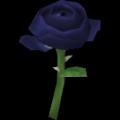"Mawar ""Langit Malam"""