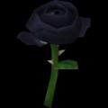 "Rose ""Dark Beauty"""