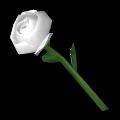 "Rose ""Pure White"""
