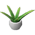 Plante en Pot