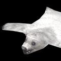 Eisbärenfell