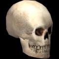 Kafatası