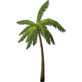 Medium Palm Tree