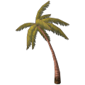 Palmeira Média