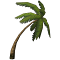 Small Bent Palm Tree