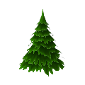 Medium Fir Tree