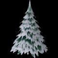 Large Fir Tree
